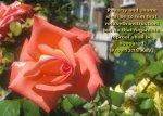 BIBLE VERSED FLOWERS (43)