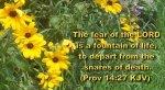 BIBLE VERSED FLOWERS (62)