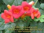 BIBLE VERSED FLOWERS (77)