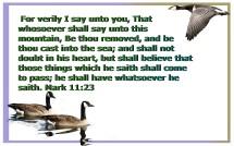 trustworthy (5)
